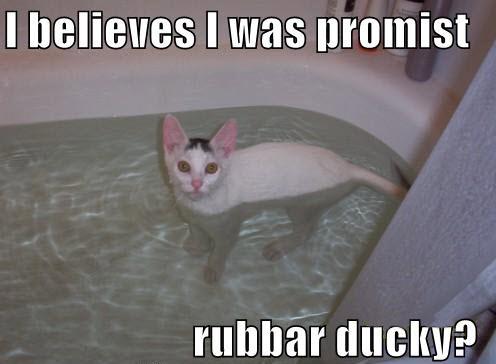 lol-cat rubber duck