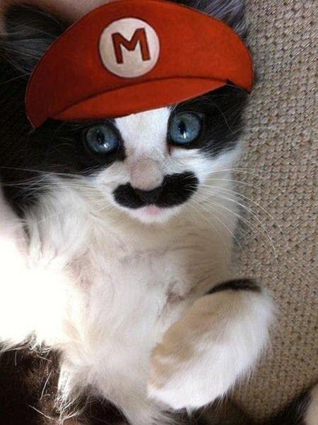 mario kitty