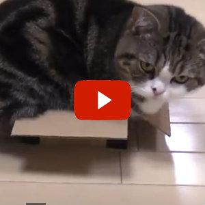 auto cat laser