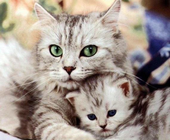 mum & kitten