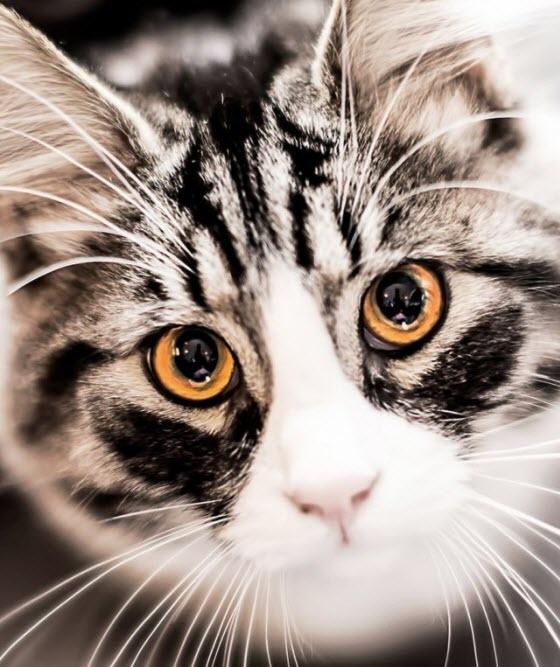 orange eyes cat
