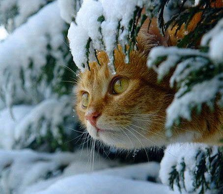 peek snow tree cat