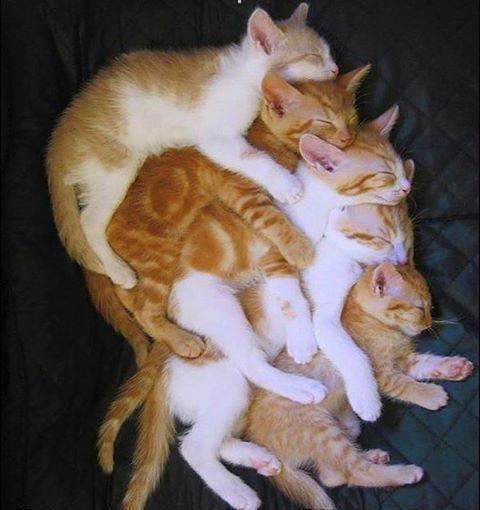 pile o cats