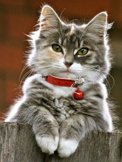 Great markings on this beautiful cat.
