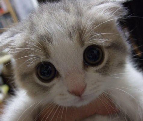 Kitten big eyes!