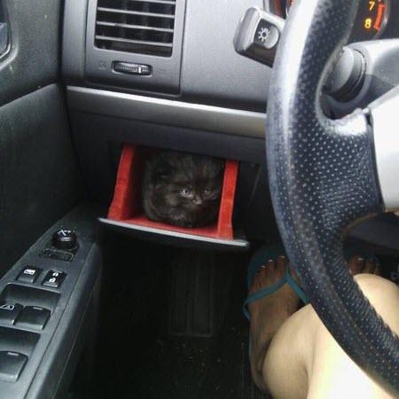 car kitten holder