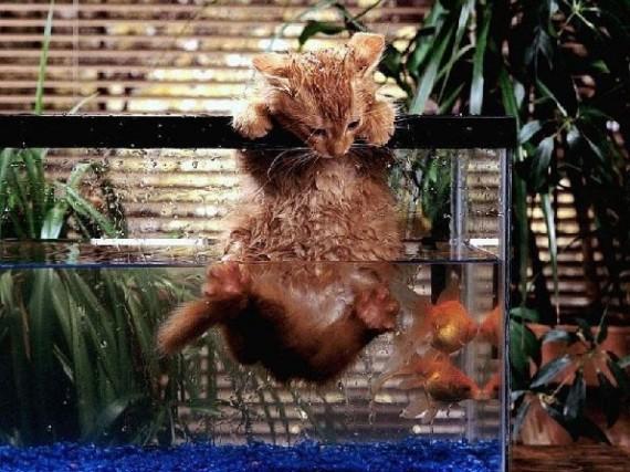 cat in fish tank