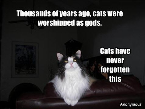 cats-were-worshipped-as-god