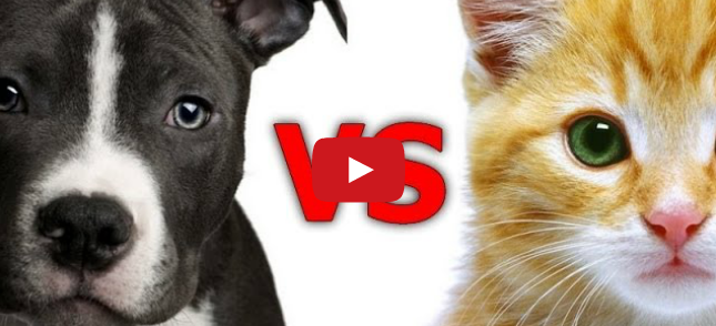 similarities between dogs and cats House rabbits vs house cats  with house rabbits growing in popularity, we take a took at the similarities and differences between living with rabbits or cats.
