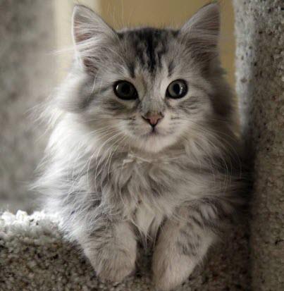 fluffy kitten time!