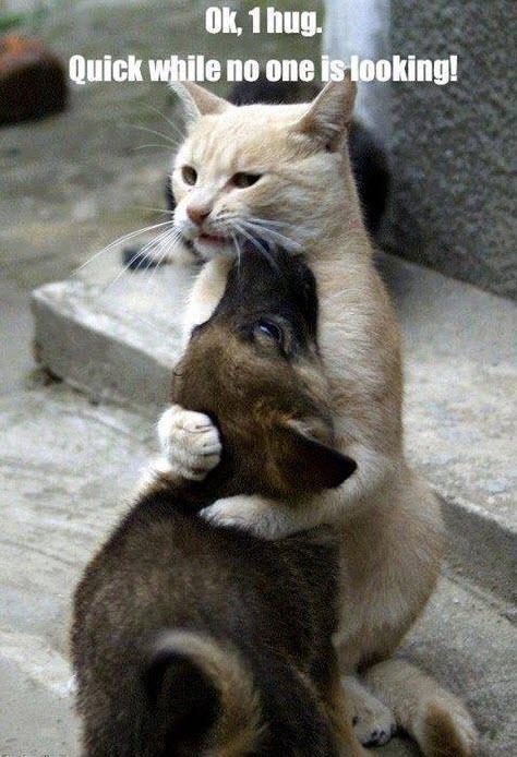 1 hug