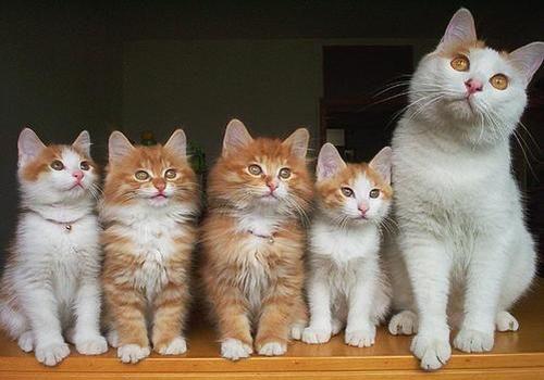cat & 4 kittens