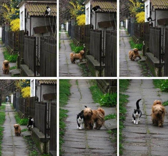 cat and dog walks together