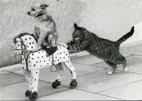 cat, dog and rocking horse