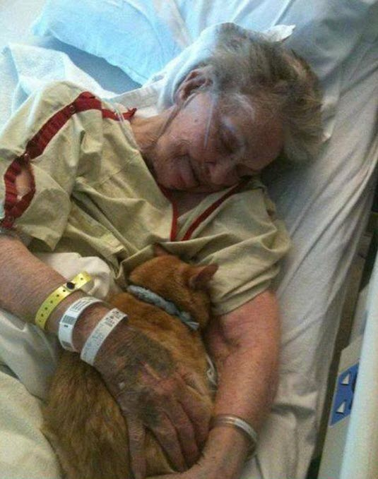 cat in hosp