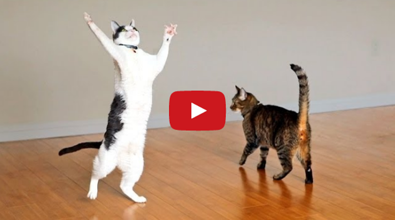 Cats and kittens pictures videos care tips and news we love kitties dance with ceiling fan mozeypictures Image collections