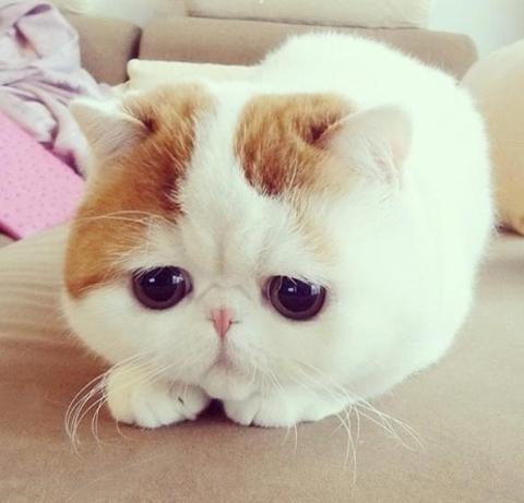 cute and sad