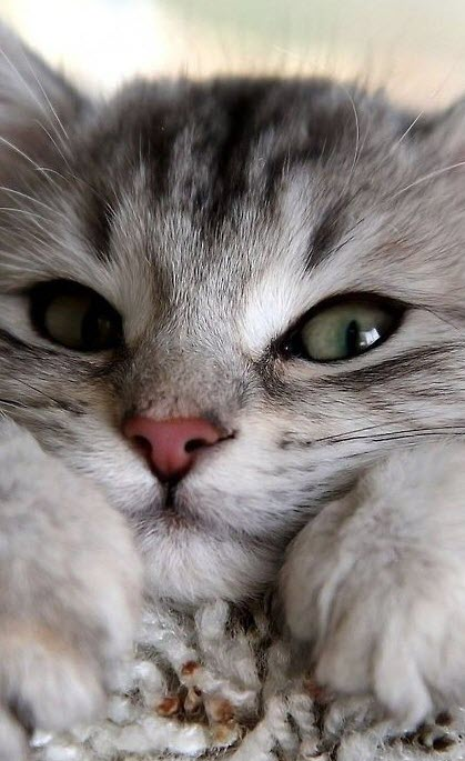 cute kitten close up