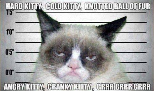 hard kitty