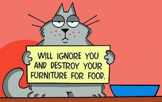 ignore you