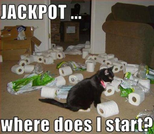 jackpot toilet rolls