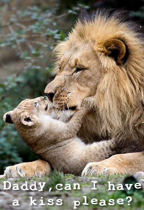 lion and cub kiss