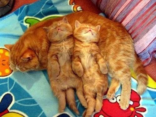 mum's make the best pillows