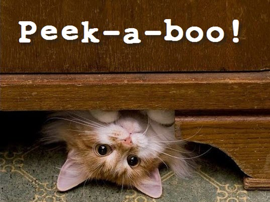 peek a boo cat