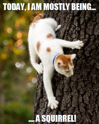 today squirrel