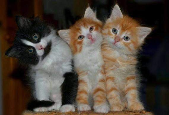 3 kittens 2