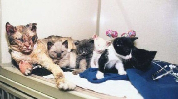 A mother cat rescues kittens,