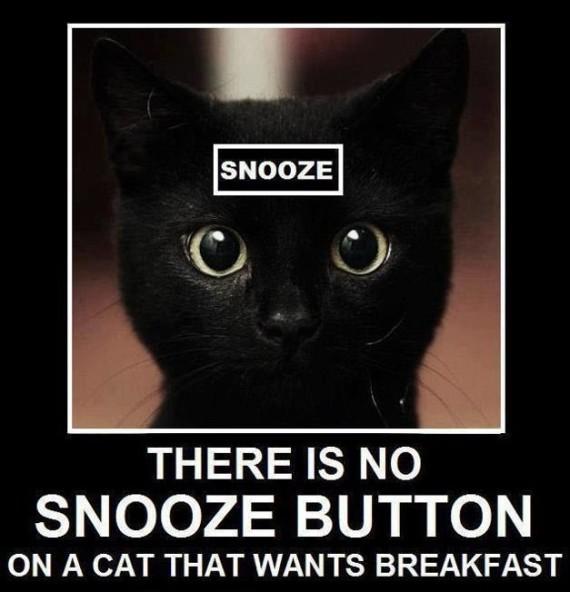 Snooze cat