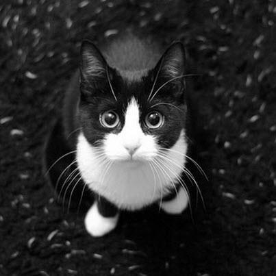 What a pretty kitty.