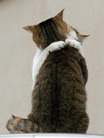 cats hug