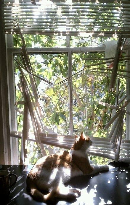 cats love sunshine