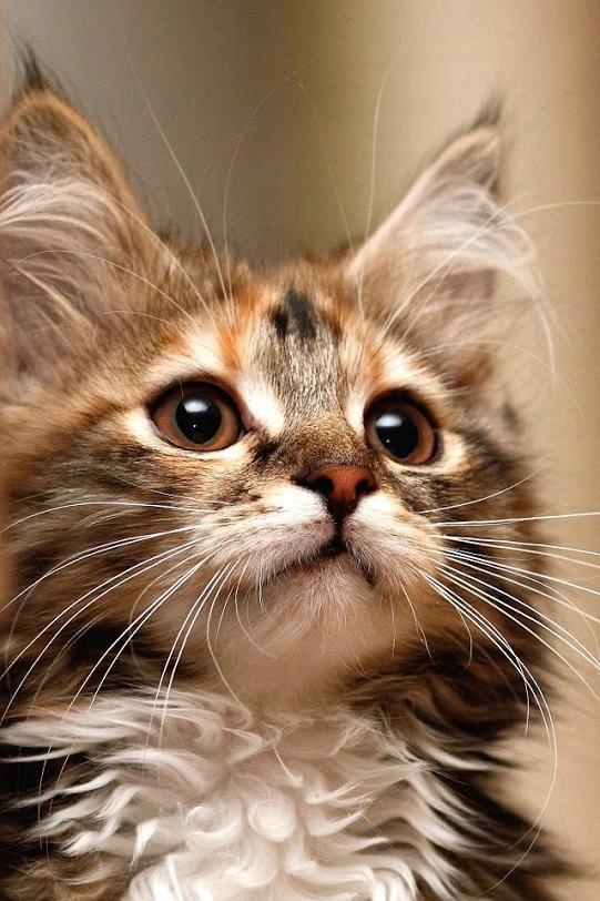 cute big ears