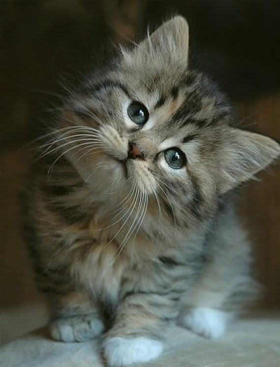 cute cat head tilt