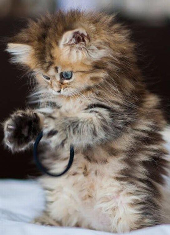 cute fluffy kitten 3