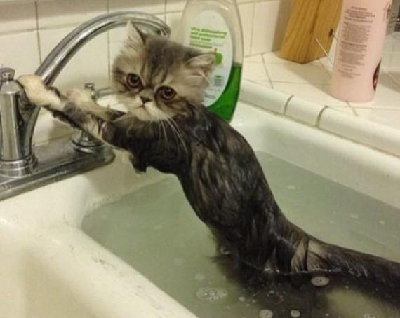 cute wet