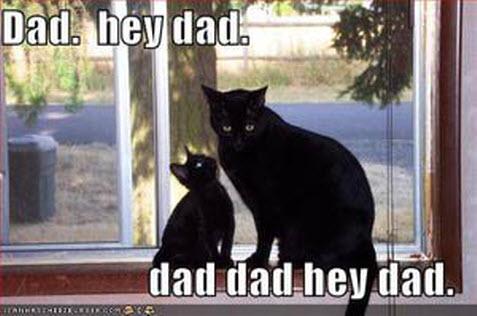 dad_cat