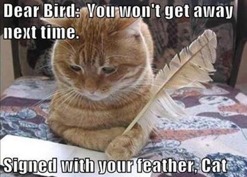dear bird lol