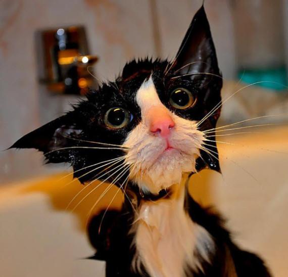 wetcat