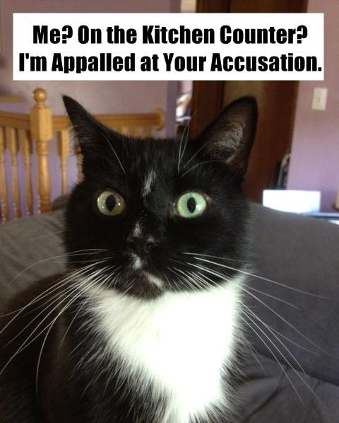 kitchen counter cat LOL