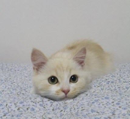kitten pounce 2