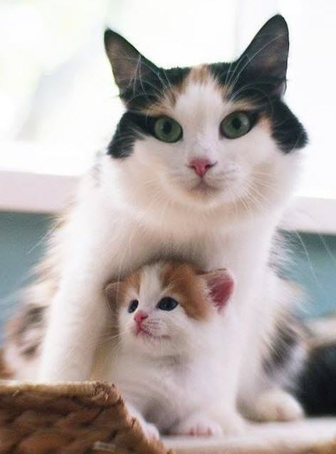 mum and kitten 2