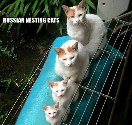 russian nesting cats