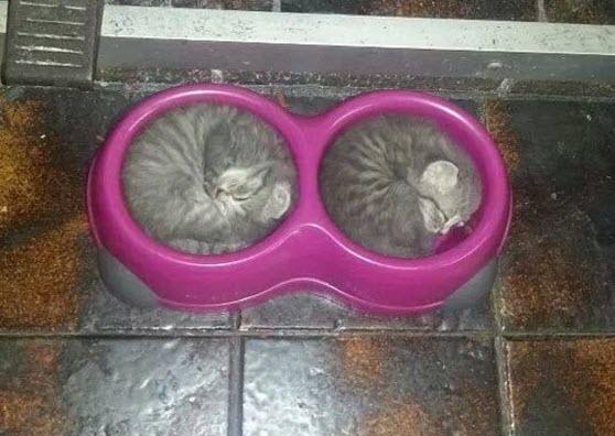 sleep in bowl
