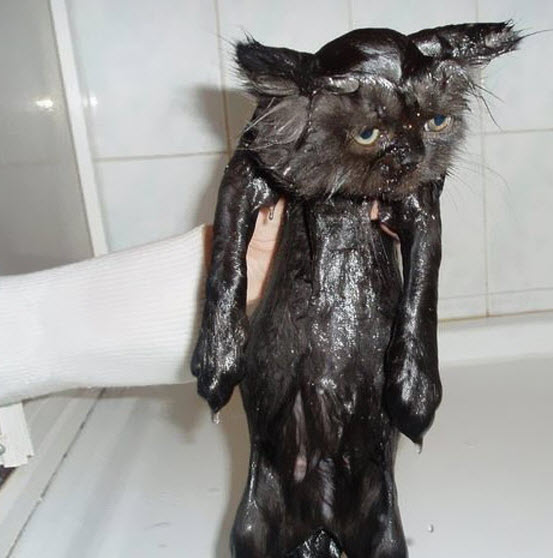 wet black cat