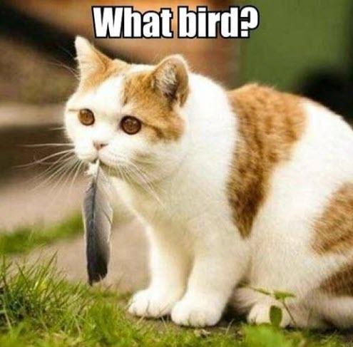 what bird cat lol