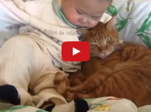 baby and cat friendship